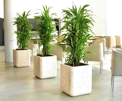 potted plant suppliers in Lagos Nigeria