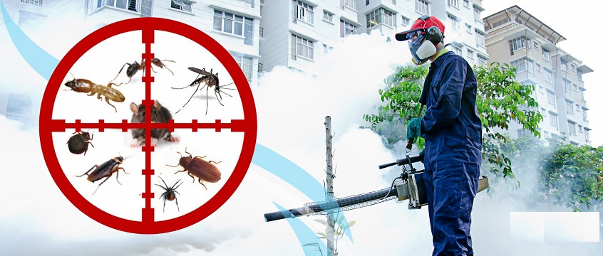 Fumigation And Pest Control Company In Nigeria