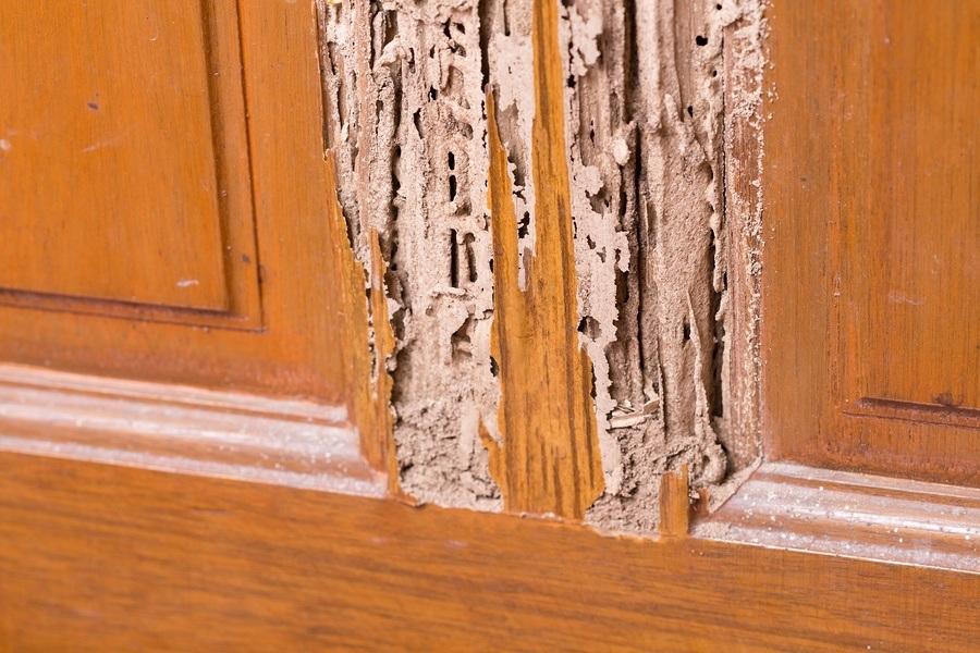 termite control service lagos