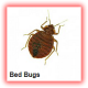 bed bugs fumigation