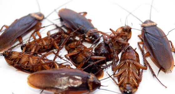 cockroaches control in lagos