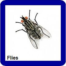 fly fumigation nigeria