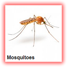 mosquitos fumigation