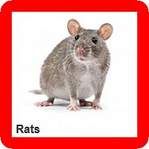 Rat Control Service Lagos