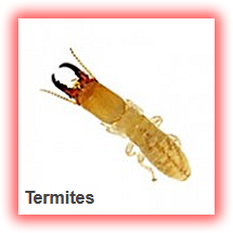 termite treatment lagos nigeria