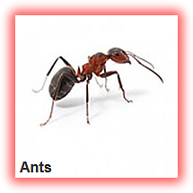 ANTS CONTROL AND FUMIGATION IN NIGERIA