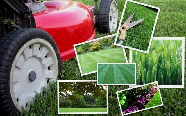 lawn maintenance nigeria