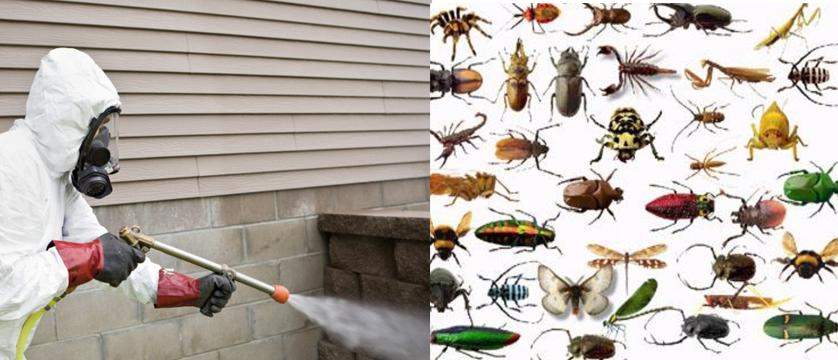 insect control Tauranga