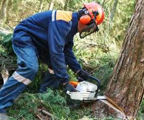 tree felling professionals in Lagos