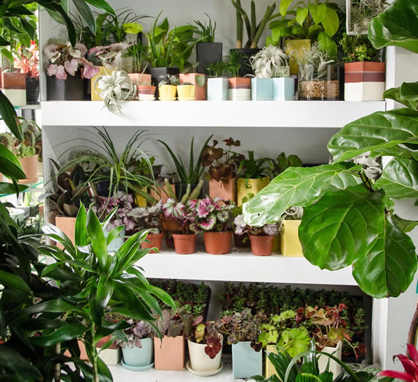 Indoor live and artificial houseplants for office