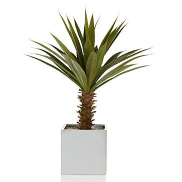 yucca flower cost in Lagos Nigeria