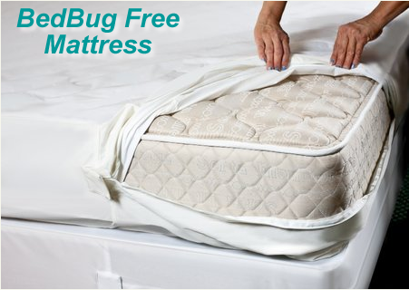 bed bug free service