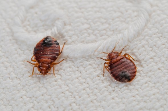 bed bug fumigation comany in nigeria