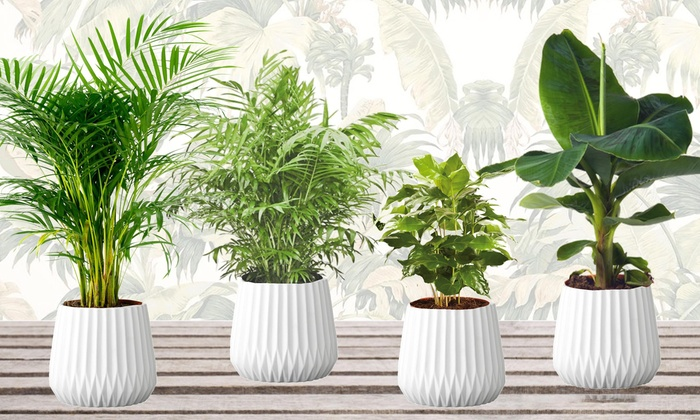 benefits of indoor plants in Nigeria