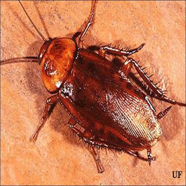 cockroach control experts lagos
