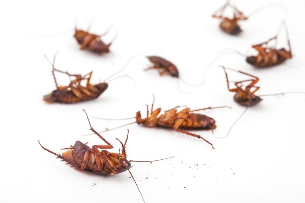 cockroach killing solution in lagos