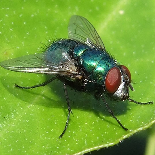 housefly control lagos