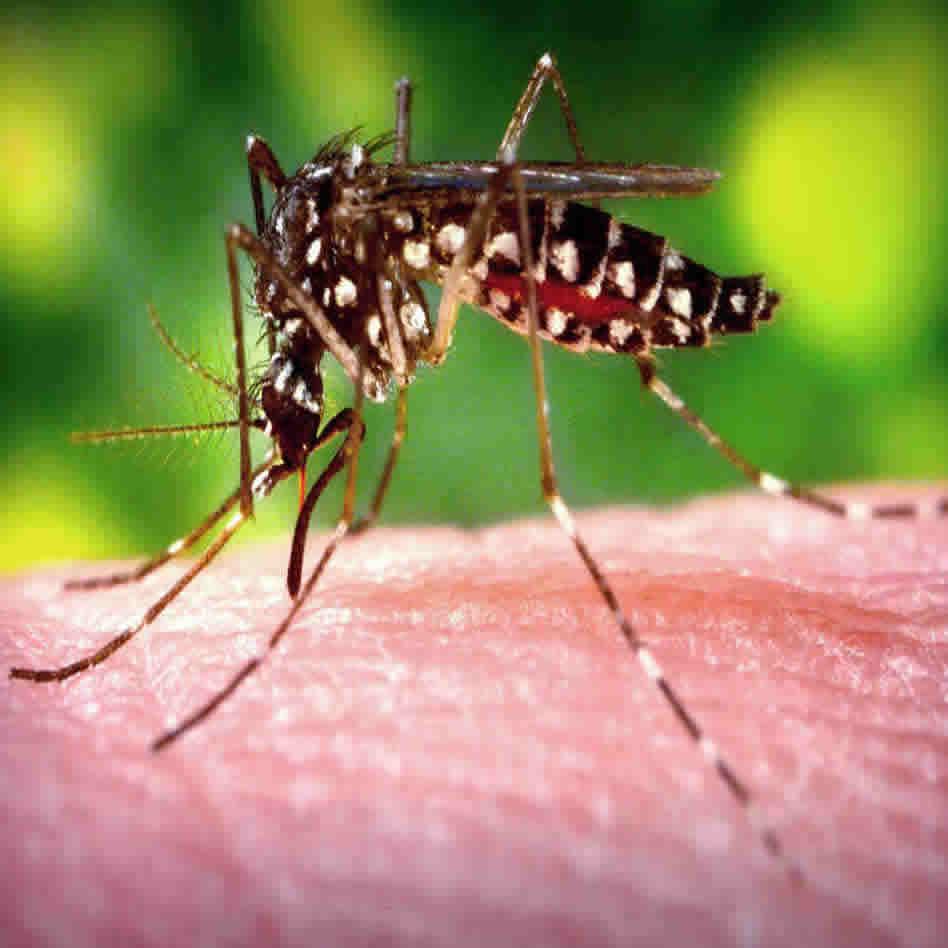 mosquito_control_lagos