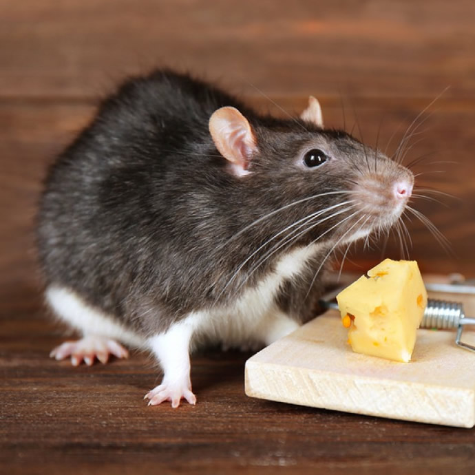rat extermination service nigeria