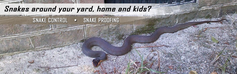 snake-removal-service-lagos
