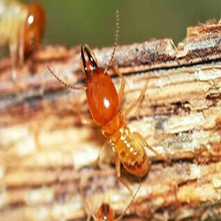 termite-extermination-treatment-lagos