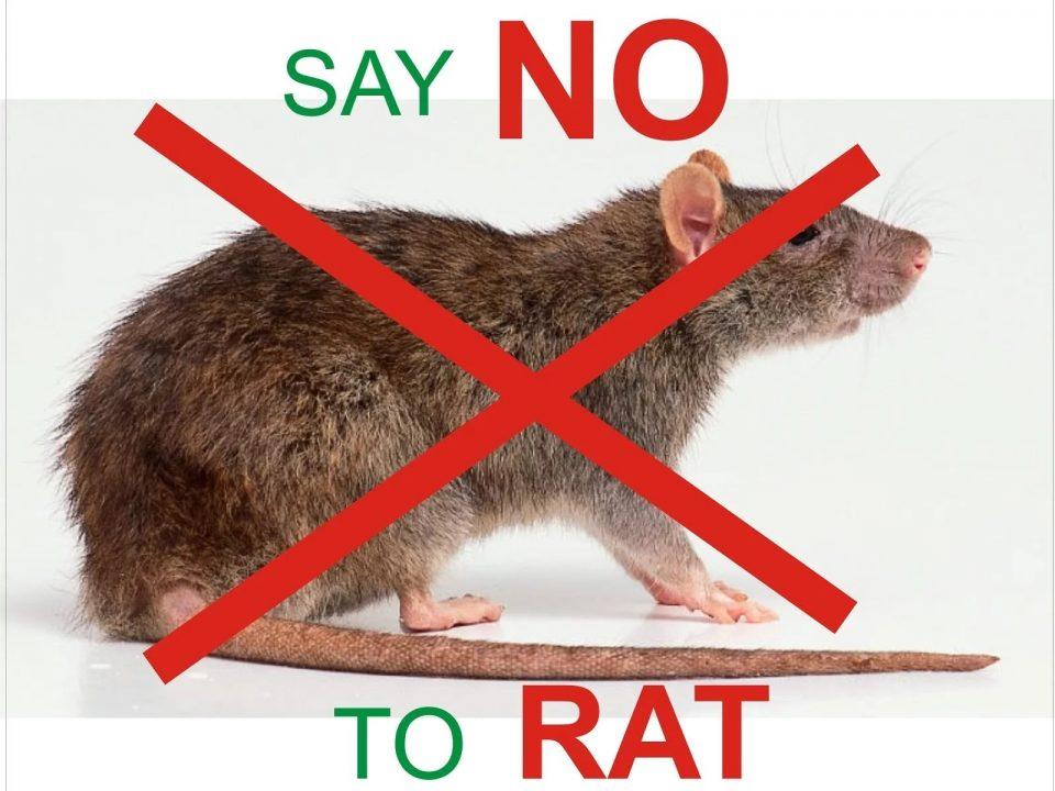 say no to rats
